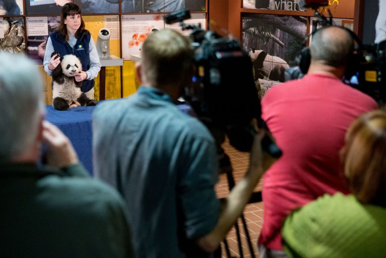Biologist Laurie Thompson holds up Bei Bei, the National Zoo's newest panda and offspring of Mei Xiang and Tian Tian, for members of the media at the National Zoo in Washington, Monday, Dec. 14, 2015. Bei Bei will be making his public debut on January 16, 2016. (AP Photo/Andrew Harnik)