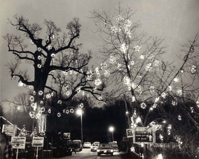 Holiday lights adorn trees at Valley View Farms in Cockeysville in 1977. (Joseph DiPaola/Baltimore Sun)