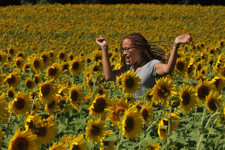 Asia Nowell, 13, of Bel Air enjoys a field of sunflowers at Clear Meadow Farm on Norrisville Road. She had the day off from school because of the Rosh Hashanah holiday. (Amy Davis, Baltimore Sun)