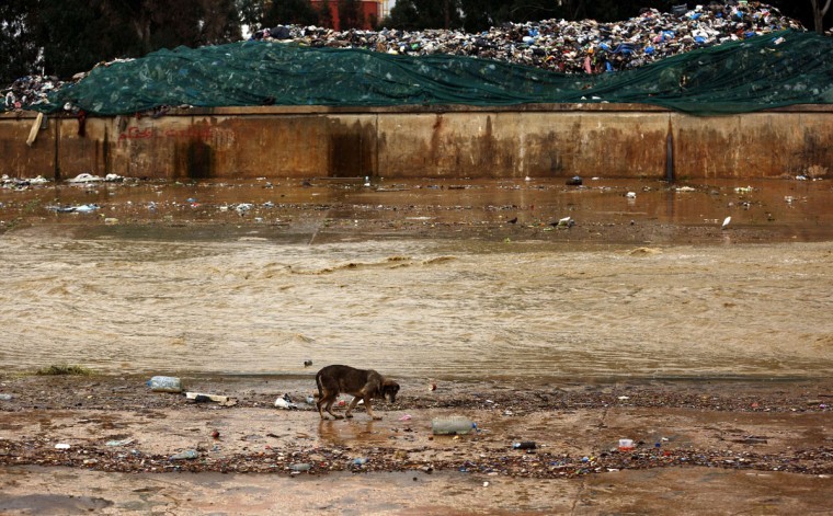 A stray dog looks for food in a polluted river bed in the Lebanese capital, Beirut, as garbage pills up in the background on January 5, 2016. (PATRICK BAZ/AFP/Getty Images)