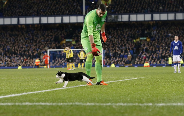 Everton goalkeeper Joel Robles tries to remove a cat from the pitch during their English FA Cup, third round soccer match against Dagenham and Redbridge at Goodison Park, Liverpool, England, Saturday, Jan. 9, 2016. (Peter Byrne/Associated Press)