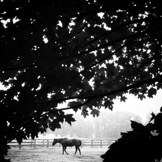 A horse takes a stroll in Hydes, Maryland.  (Lloyd Fox/Baltimore Sun)