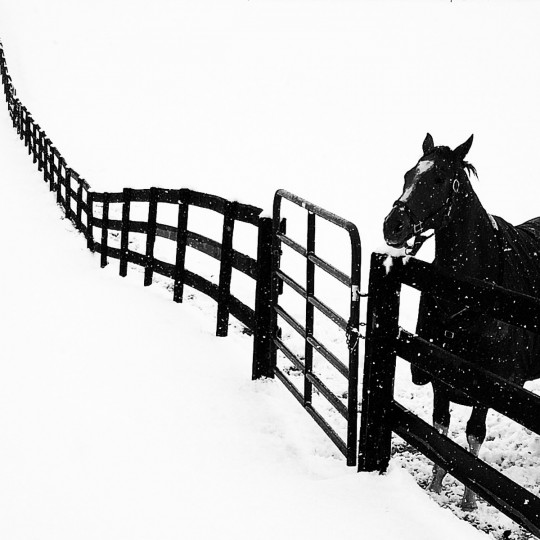 A horse in the snow at Rutledge Ridge Farm in Fallston, Maryland.   (Lloyd Fox/Baltimore Sun)