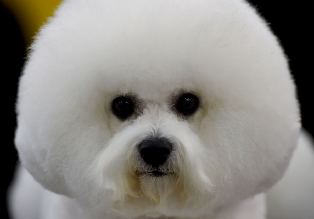 140th Westminster Dog Show begins
