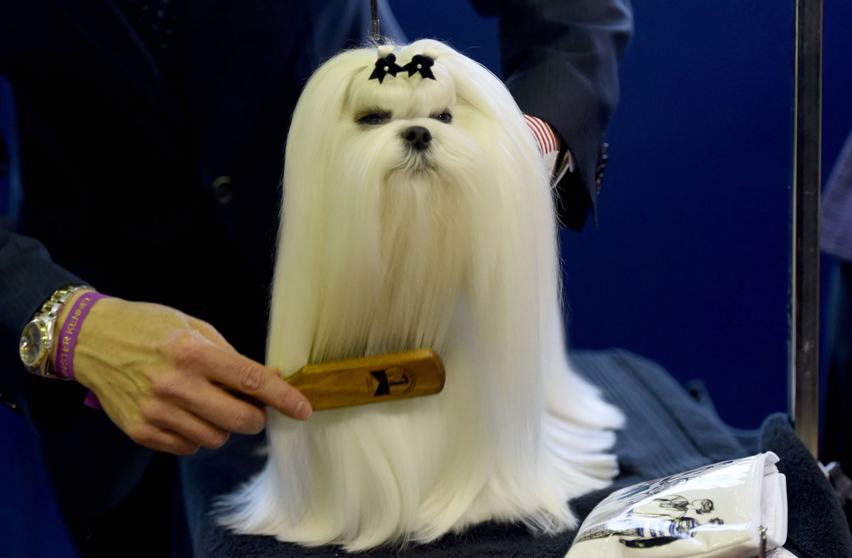 Th Westminster Dog Show