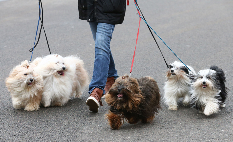 Crufts, the world's largest dog show, opens in Birmingham, England
