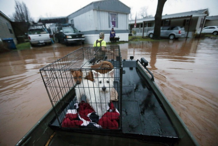 Sam Breen tows his skiff as he helps his friend Roger Dove, not pictured, retrieve his dogs Edison, foreground, and Allie, from his home, as floodwater rises at the Pecan Valley Estates trailer park in Bossier City, La., Wednesday, March 9, 2016. (AP Photo/Gerald Herbert)