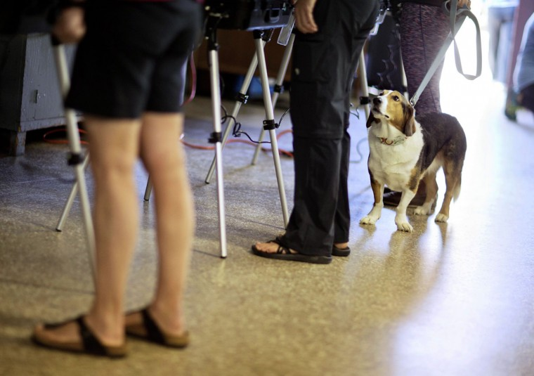 Tess, a Basset Hound and Collie mix, looks up at voters as her owner Lindsay Greco, right, casts her ballot in the Georgia primary election at a polling site in a firehouse Tuesday, March 1, 2016, in Atlanta. (AP Photo/David Goldman)