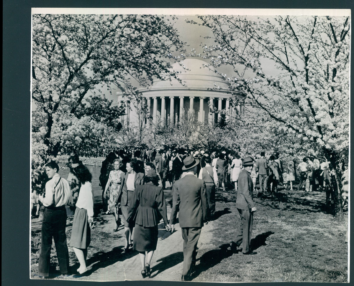 From the vault: Cherry Blossom Queens and trees in Washington, D.C.