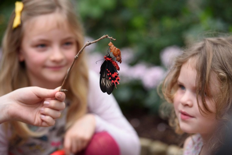Children pose for pictures as they look at a Queen of the Philippines butterfly during a photocall at the Natural History Museum in central London, on March 23, 2016. (LEON NEAL/AFP/Getty Images)