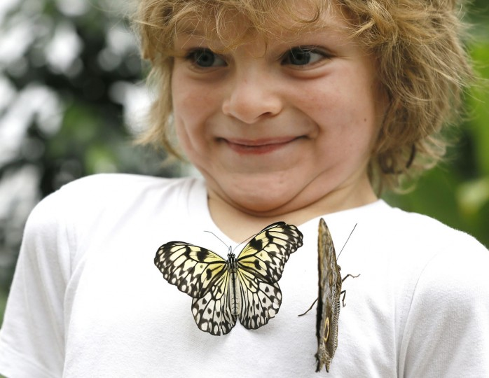 Adam Sharif smiles as butterflies land on his shirt during a photo call for hundreds of tropical butterflies being released, to launch the Natural History Museum's Sensational Butterflies exhibition in London, Wednesday, March 23, 2016. The exhibition opens to the public on March 24 and runs until Sept. 11. (AP Photo/Kirsty Wigglesworth)