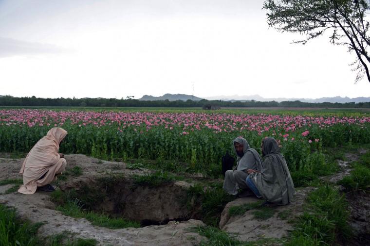 In this photograph taken on April 2, 2016, Afghan farmers sit near a poppy field in Zari District of Kandahar province. Opium poppy cultivation in Afghanistan dropped 19 percent in 2015 compared to the previous year, according to figures from the Afghan Ministry of Counter Narcotics and United Nations Office on Drugs and Crime. (Jawed Tanveer/AFP/Getty Images)