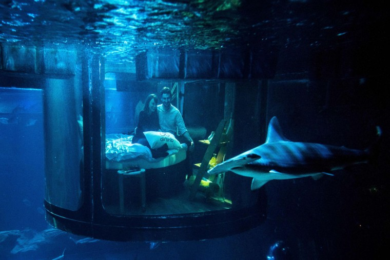 accommodation site look at a shark tank from an underwater bedroom