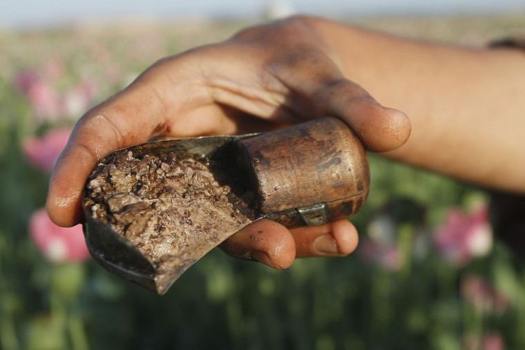 In this Monday, April 11, 2016 photo, an Afghan farmer shows some harvested raw opium at a poppy field in Zhari district of southern Kandahar province, Afghanistan. A recent uptick in violence across the south will worsen once the poppy crop is harvested in coming weeks and the extremists deploy gunmen to protect their vast smuggling empire, officials, analysts and diplomats are predicting. (AP Photos/Allauddin Khan)