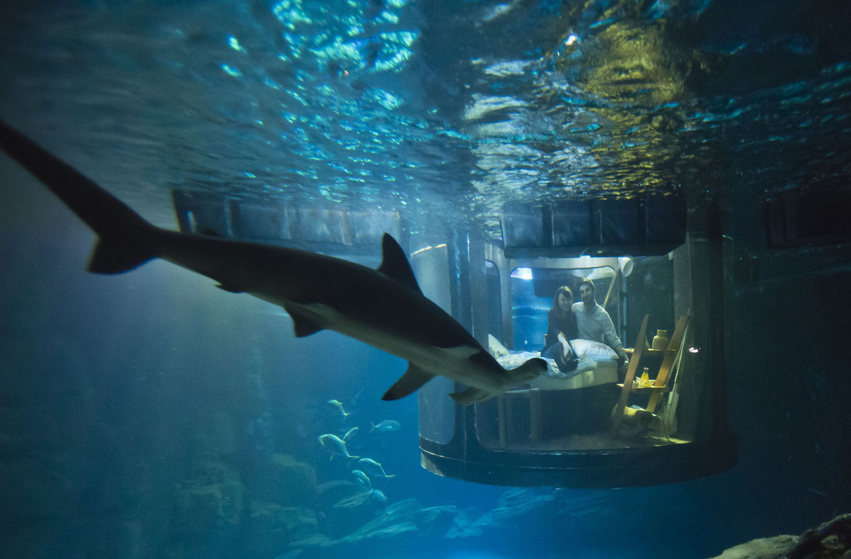 Paris aquarium s underwater bedroom for Shark fish tank