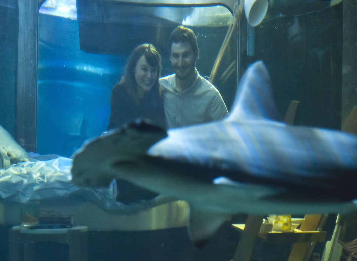 alastair shipman look at a shark as they sit in a underwater bedroom