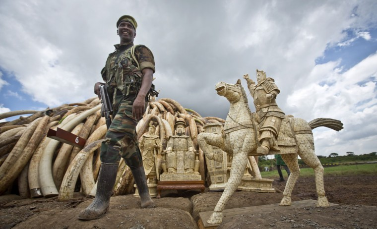 A ranger from the Kenya Wildlife Service (KWS) stands guard near an ivory statue in front of one of around a dozen pyres of ivory, in Nairobi National Park, Kenya Thursday, April 28, 2016. The wildlife service has stacked 105 tons of ivory consisting of 16,000 tusks, and 1 ton of rhino horn, from stockpiles around the country, in preparation for it to be torched on Saturday to encourage global efforts to help stop the poaching of elephants and rhinos. (AP Photo/Ben Curtis)