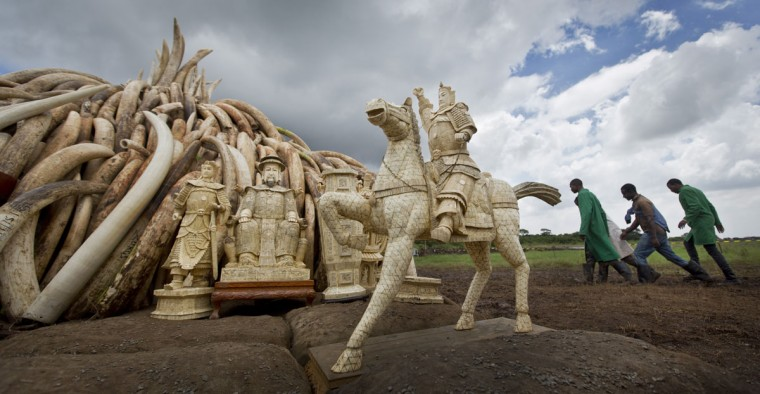 Workers walk past as ivory statues stand in front of one of around a dozen pyres of ivory, in Nairobi National Park, Kenya Thursday, April 28, 2016. The Kenya Wildlife Service (KWS) has stacked 105 tons of ivory consisting of 16,000 tusks, and 1 ton of rhino horn, from stockpiles around the country, in preparation for it to be torched on Saturday to encourage global efforts to help stop the poaching of elephants and rhinos. (AP Photo/Ben Curtis)