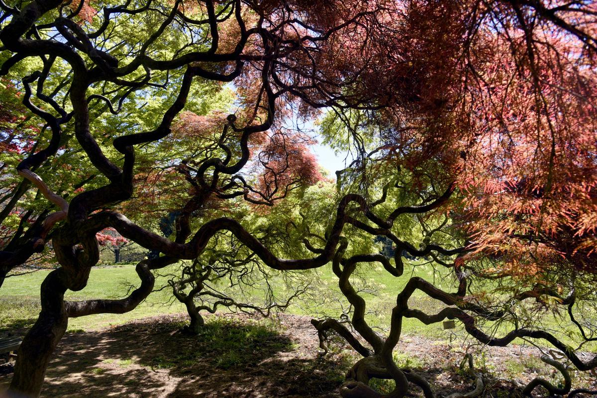 Cylburn Arboretum, Baltimore's largest public garden