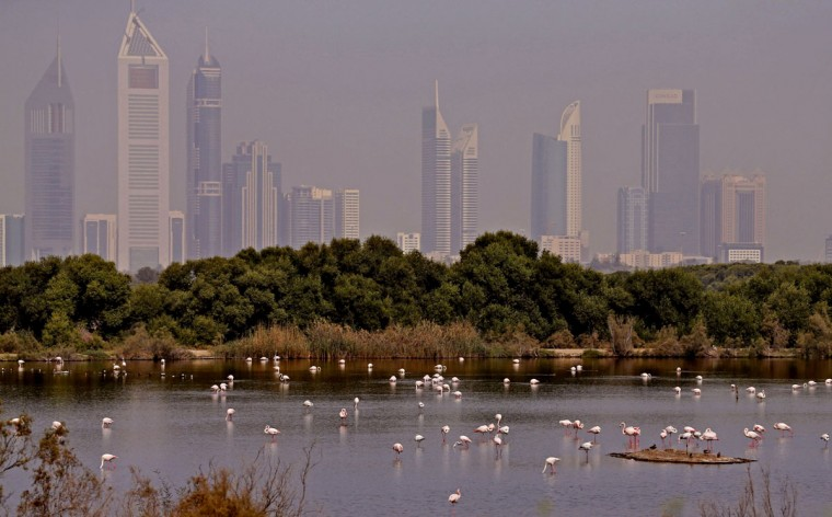 Pink flamingos are pictured in the water at the Ras al-Khor Wildlife Sanctuary on the outskirts of Dubai in the United Arab Emirates on March 26, 2015. (KARIM SAHIB/AFP/Getty Images)