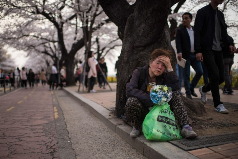 In a photo taken on April 6, 2016 a woman sits beneath cherry blossoms on Yeouido island in Seoul. The annual cherry blossom festival on Yeouido island in central Seoul runs from April 1-10. (ED JONES/AFP/Getty Images)