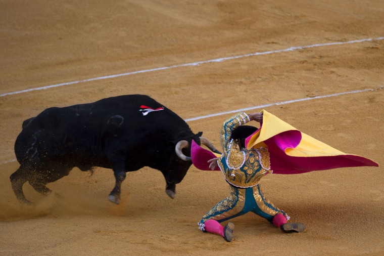 "Spanish matador Cayetano Rivera kneels to perform a pass with ""capote"" to a bull during the Corpus bullfighting festival at the bullring of Granada on May 25, 2016. (JORGE GUERRERO/AFP/Getty Images)"