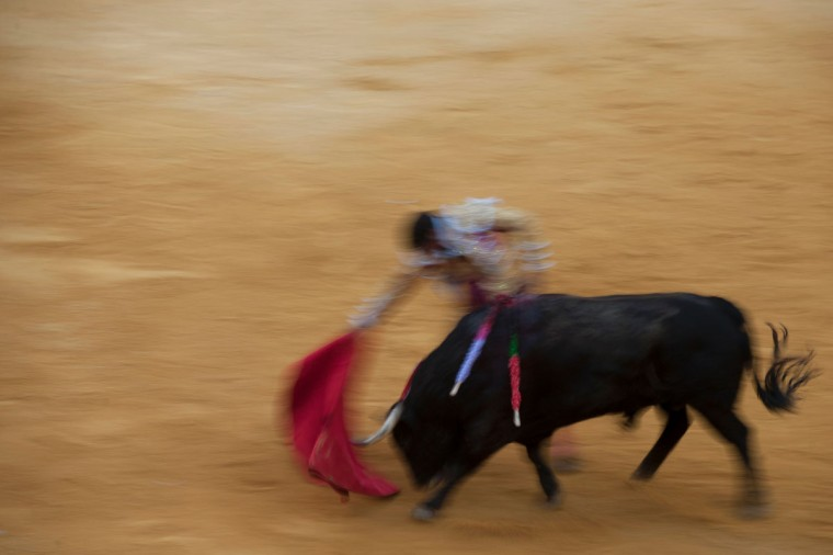 "Spanish matador Francisco Rivera Ordonez performs a pass with ""muleta"" on a bull during the Corpus bullfight festival at the bullring of Granada on May 25, 2016. (JORGE GUERRERO/AFP/Getty Images)"
