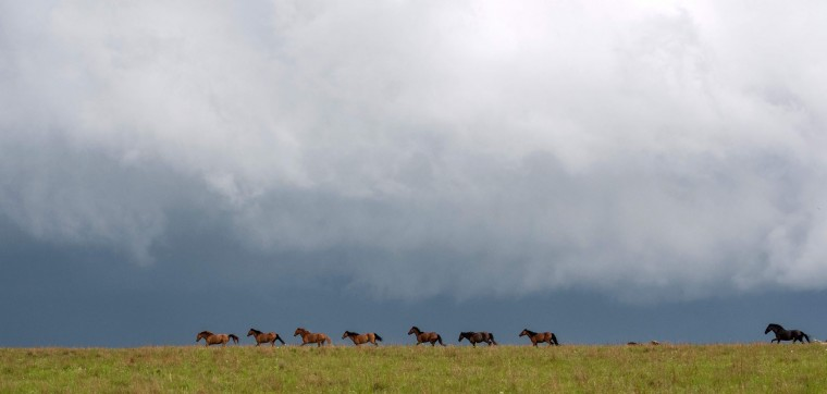 Horses run as an impending rain-wrapped tornado nears Hickory, Oklahoma on May 9, 2016. A series of tornadoes struck rural Oklahoma on May 9th. One person is confirmed dead. (Josh Edelson/AFP/Getty Images)
