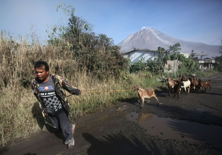 A villager leads his goats as he evacuates his home following the eruption of Mount Sinabung in Gamber village, North Sumatra, Indonesia, Sunday, May 22, 2016. The volcano in western Indonesian unleashed hot clouds of ash on Saturday, killing several villagers, an official said. (AP Photo/Binsar Bakkara)
