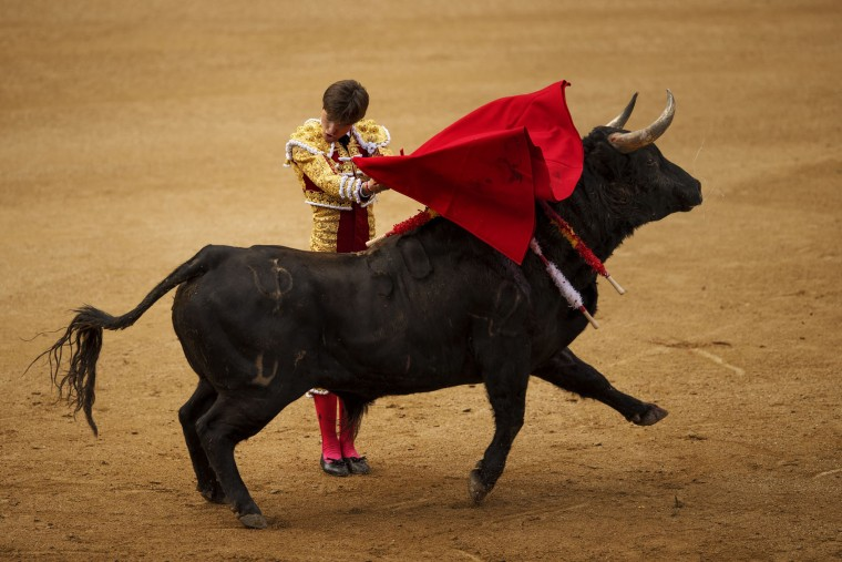 Spanish bullfighter Juan Leal performs with a Pedraza de Yeltes ranch fighting bull during a bullfight at the Las Ventas bullring in Madrid, Tuesday, May 17, 2016. (AP Photo/Daniel Ochoa de Olza)