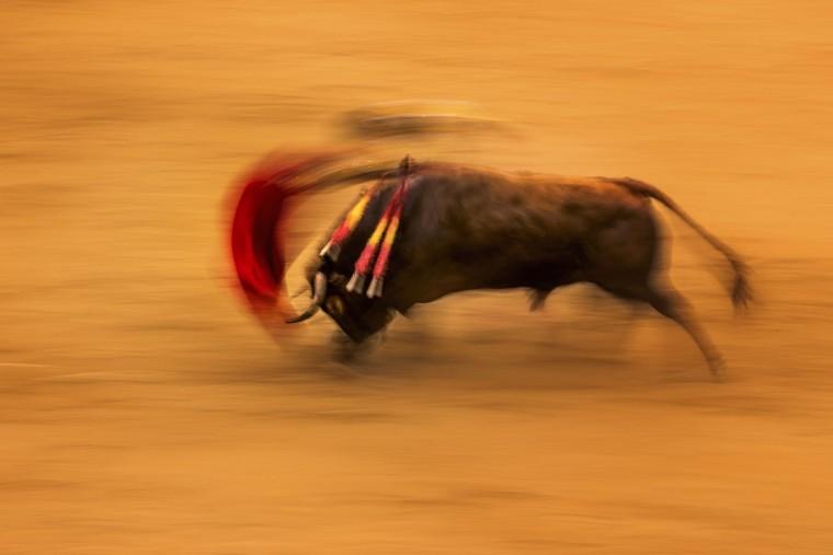 Spanish bullfighter Juan Del Alamo performs with a Pedraza de Yeltes ranch fighting bull during a bullfight at the Las Ventas bullring in Madrid, Tuesday, May 17, 2016. (AP Photo/Daniel Ochoa de Olza)