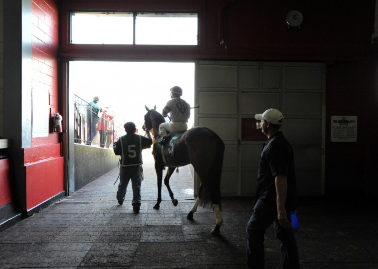 Nik Juarez heads out to the track aboard #5 Mom'z Laugh at Pimlico race course.  (Lloyd Fox/Baltimore Sun)