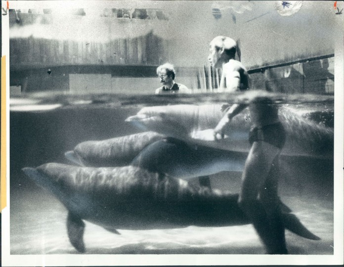 August 12, 1982: Workers at Baltimore's National Aquarium--their figures distorted in this view through the transparent tank--herded three dolphins toward special slings yesterday for a trip to their likely retirement home in Florida. The dolphins--Mimi, Aphrodite and Kibby... have developed ulcers and other stress-related problems which aquarium officials believe were caused by design deficiencies in their tank. The dolphins were flown to the Flipper Sea School at Grass Key. (Pearson/Baltimore Sun)