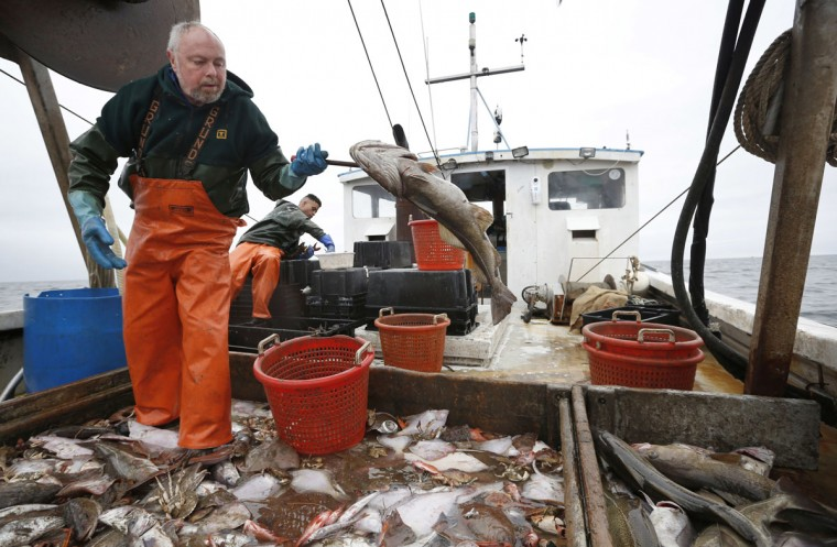 David Goethel flips a cod while sorting ground fish caught off the coast of New Hampshire. To Goethel, cod represents his identity, his ticket to middle class life, and his link to one the country's most historic industries, a fisherman who has caught New England's most recognized fish for more than 30 years. (AP Photo/Robert F. Bukaty)
