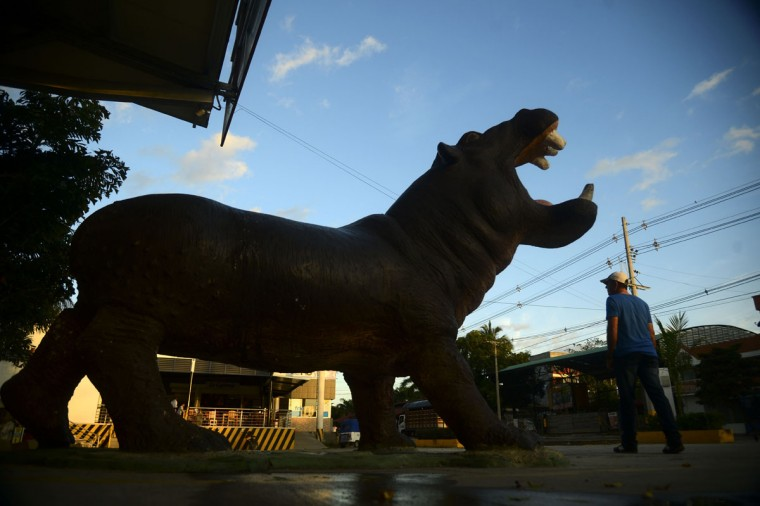 A hippo model is seen in Doradal, Antioquia department, Colombia, near the Hacienda Napoles theme park, once the private zoo of drug kingpin Pablo Escobar at his Napoles ranch, on June 22, 2016. (RAUL ARBOLEDA/AFP/Getty Images)