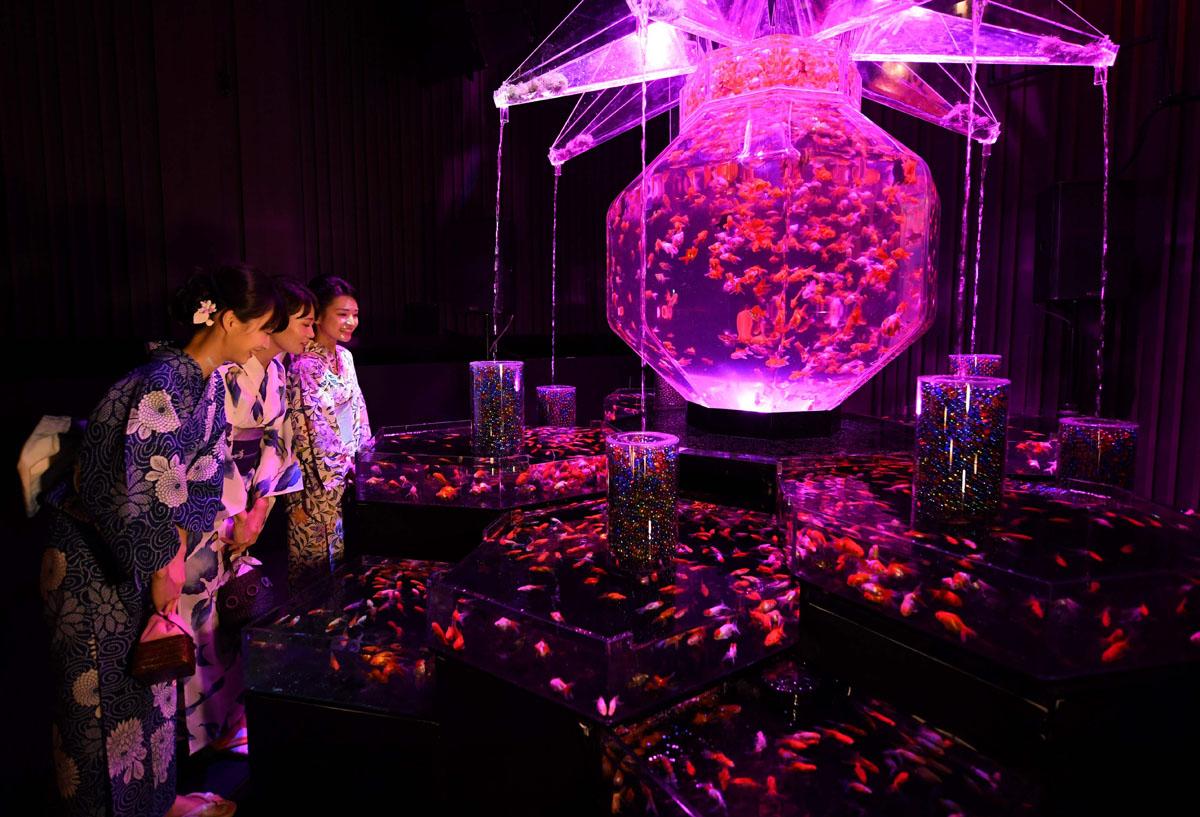 Exhibition Booth Japan : Goldfish displayed in tokyo art exhibit
