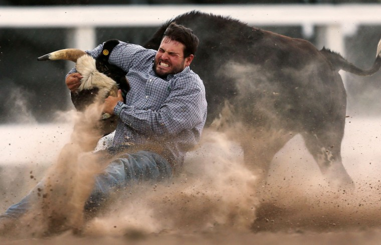 Baxtor Roche, of Tremonton, Utah, tries to bring down his steer in the third section of the steer wrestling event during the first day of the Cheyenne Frontier Days Rodeo, Saturday, July 23, 2016, at Frontier Park Arena in Cheyenne, Wyo. (Blaine McCartney/Wyoming Tribune Eagle via AP)