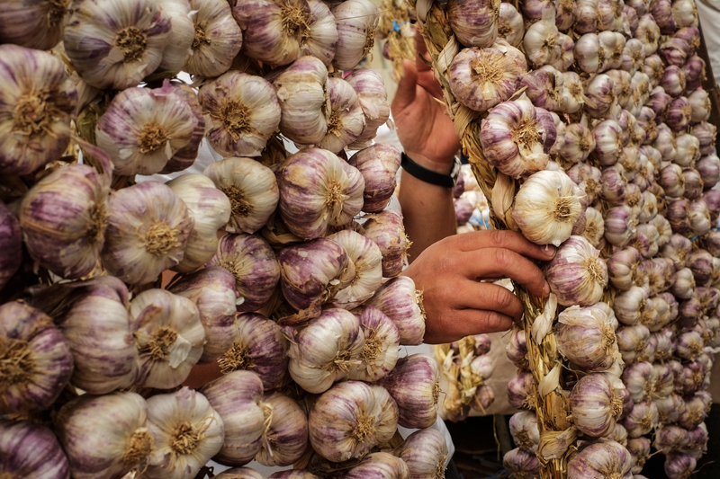 Traditional garlic fair on St. James' Day in northern Spain