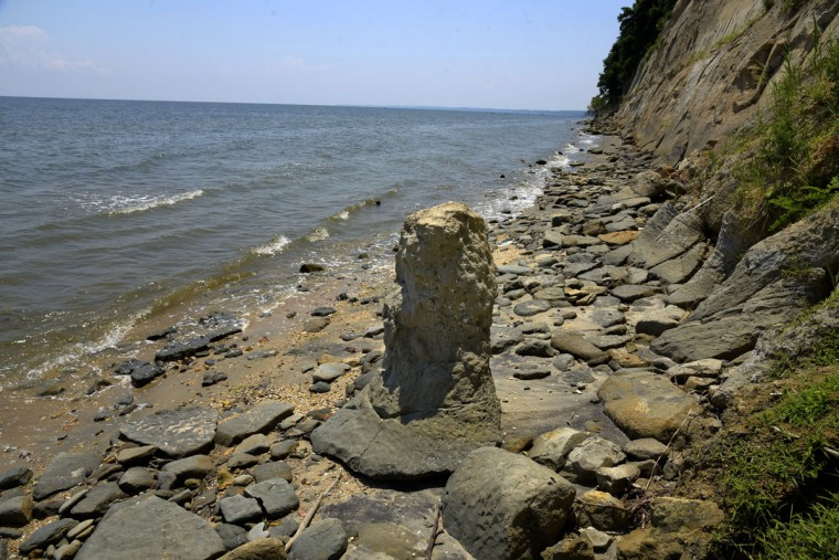 In this section of Calvert Cliffs at Dares Beach, there has been much erosion as seen from these stones and boulders which have fallen to the shore. Sections of the cliffs can fall at a moment's notice. (Algerina Perna/Baltimore Sun)
