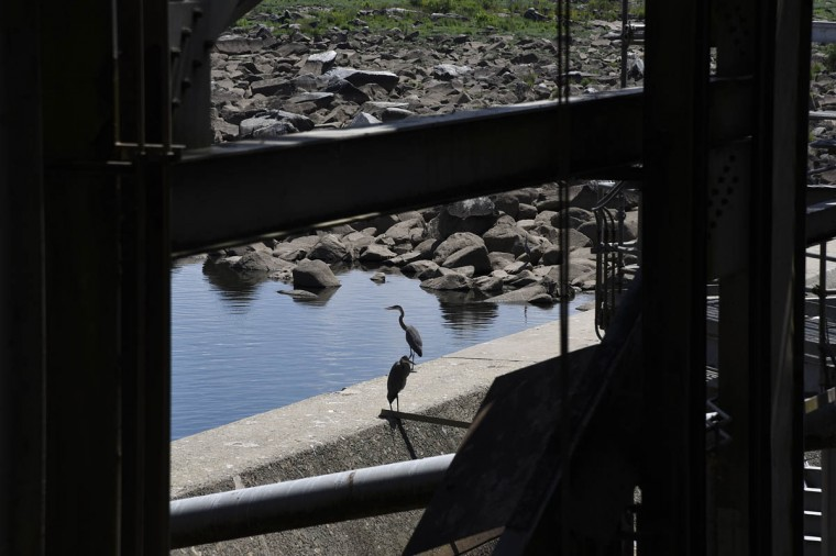 A pair of blue herons stand on a ledge near the dam at the Exelon Conowingo Hydroelectric Plant, which has been producing electricity on the Susquehanna River since 1928. (Barbara Haddock Taylor, Baltimore Sun)