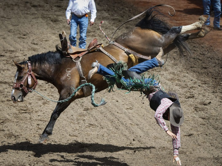 Dawson Dahm comes off during novice saddle bronc rodeo action during the Calgary Stampede in Calgary, Alberta, Sunday, July 10, 2016. (Jeff McIntosh/The Canadian Press via AP)