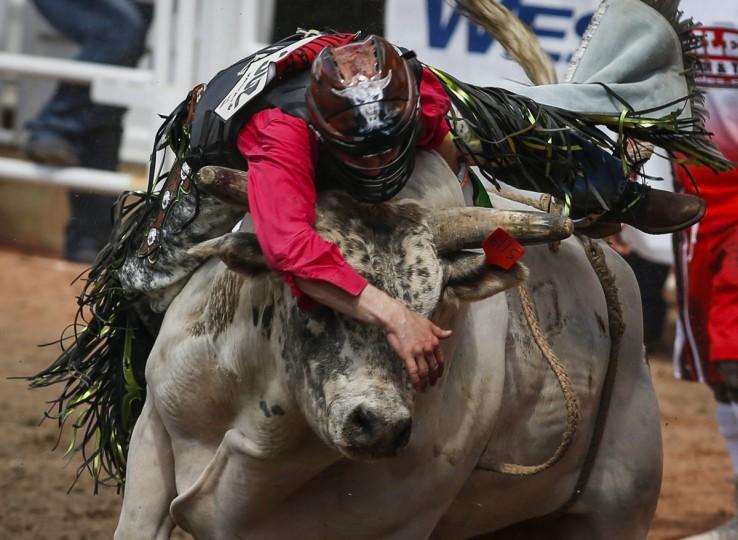Dakota Buttar, of Kindersley, Saskatchewan, stays on Houndini Magic long enough to win during a bull-riding event at the Calgary Stampede in Calgary, Alberta, Friday, July 8, 2016. (Jeff McIntosh/The Canadian Press via AP)