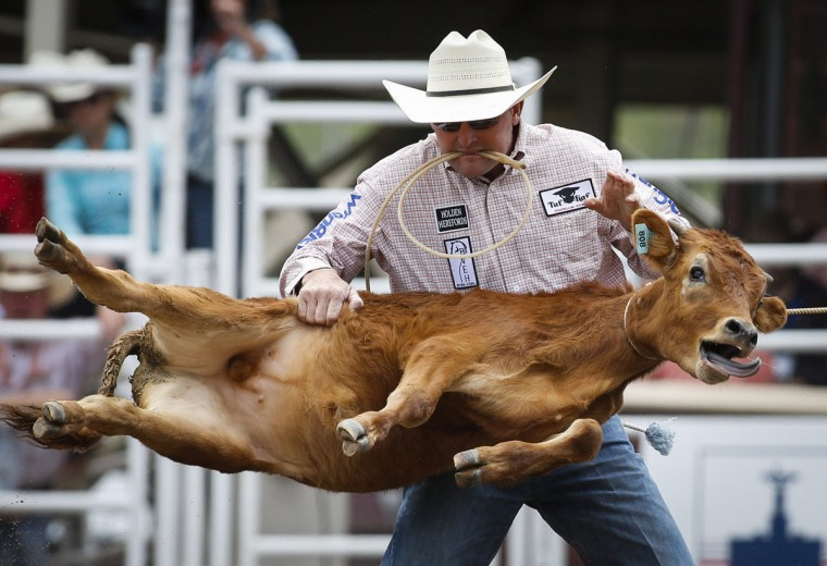 Sterling Smith, of Stephenville, Texas, competes in tie-down roping during the Calgary Stampede in Calgary, Alberta, Friday, July 8, 2016. (Jeff McIntosh/The Canadian Press via AP)