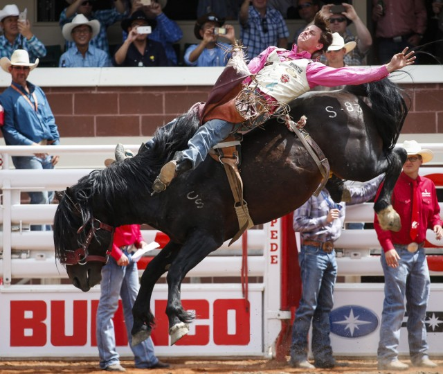RC Landingham, of Hat Creek, Calif., competes in the bareback event during the Calgary Stampede in Calgary, Alberta, Friday, July 8, 2016. (Jeff McIntosh/The Canadian Press via AP)