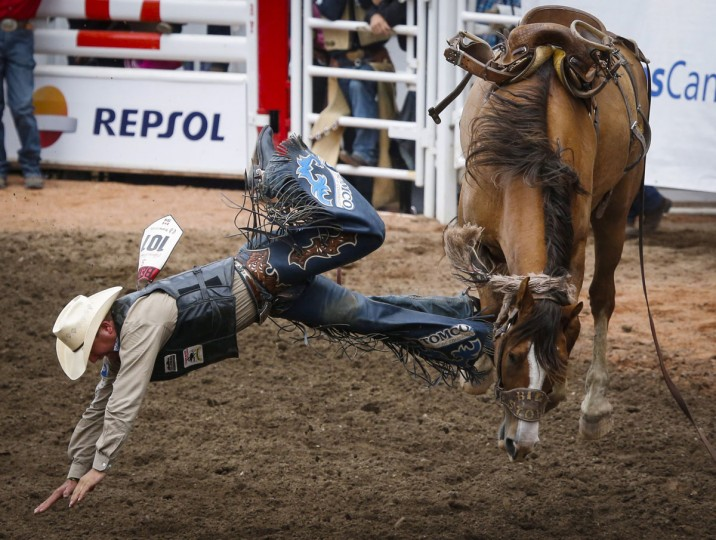 Jim Berry, from Rocky Mountain House, Alberta, comes off his mount Help Yourself during the saddle bronc event at the Calgary Stampede in Calgary, Alberta, Saturday, July 9, 2016. (Jeff McIntosh/The Canadian Press via AP)