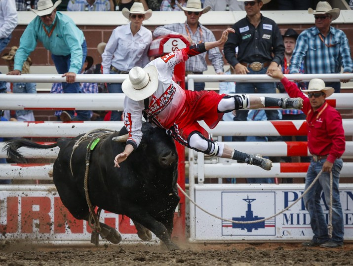 Scott Waye is tossed in the air by the bull Preacher during bull riding rodeo action at the Calgary Stampede in Calgary, Alberta, Sunday, July 10, 2016. (Jeff McIntosh/The Canadian Press via AP)