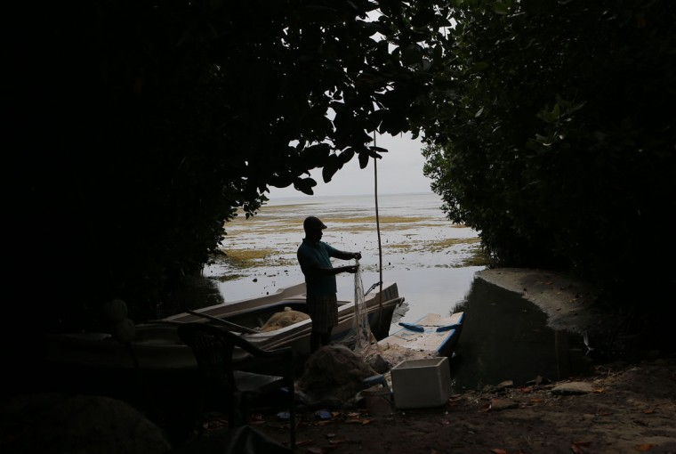 In this July 18, 2016 photo, a Sri Lankan fisherman sorts his catch after fishing in a lagoon surrounded by mangrove forests in Kaplitiya, about 130 kilometers (81 miles) north of Colombo, Sri Lanka. Sri Lanka's government and environmentalists are working to protect tens of thousands of acres of mangrove forests _ the seawater-tolerant trees that help protect and build landmasses, better absorb carbon from the environment mitigating effects of global warming and reducing impact of natural disasters like tsunamis. Authorities have identified about 37,000 acres (15,000 hectares) of mangrove forests in Sri Lanka that are earmarked for preservation. (AP Photo/Eranga Jayawardena)