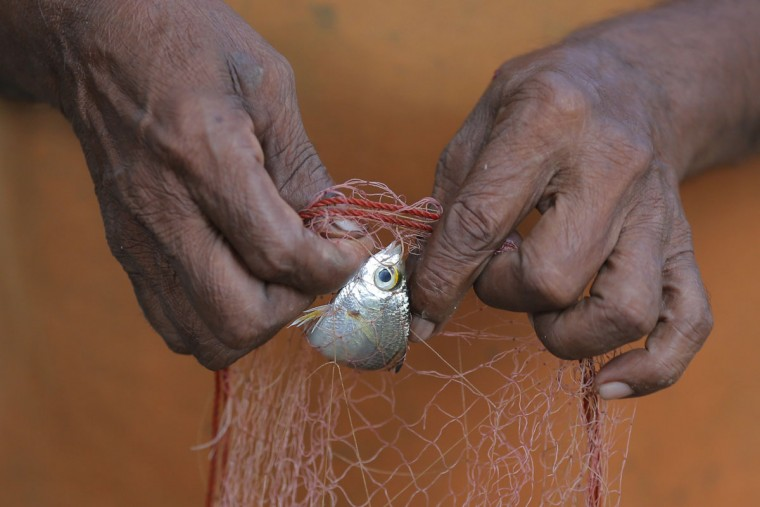 In this July 18, 2016 photo, a Sri Lankan fisherman sorts his catch after fishing in a lagoon surrounded by mangrove forests in Pambala, about 70 kilometers (44 miles) north of Colombo, Sri Lanka. Sri Lanka's government and environmentalists are working to protect tens of thousands of acres of mangrove forests _ the seawater-tolerant trees that help protect and build landmasses, better absorb carbon from the environment mitigating effects of global warming and reducing impact of natural disasters like tsunamis. Authorities have identified about 37,000 acres (15,000 hectares) of mangrove forests in Sri Lanka that are earmarked for preservation. (AP Photo/Eranga Jayawardena)