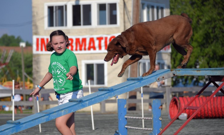 Sabrina York, 12 of Churchville observes her brown labrador retriever, Turbo, compete in the 4-H Dog Agility Contest during the annual Harford County Farm Fair. (Karl Merton Ferron / Baltimore Sun)