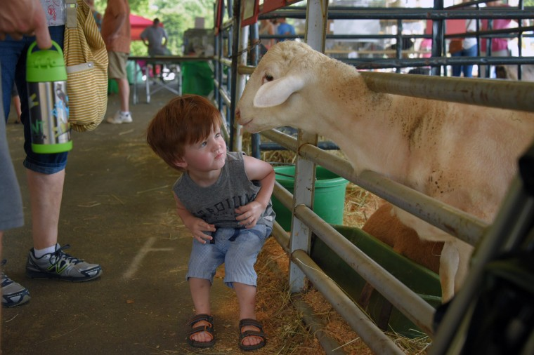 Rowan Harris, 2 of Bel Air gets a child's eye view of Ron, a Katahdin ram owned by Darlington Lamb, during the annual Harford County Farm Fair. (Karl Merton Ferron / Baltimore Sun)